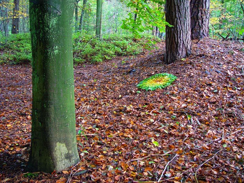 cirkel van herfstbladeren